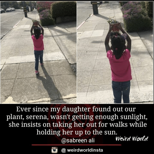 serena: Ever since my daughter found out ou:r  plant, serena, wasn't getting enough sunlight,  she insists on taking her out for walks while  holding her up to the sun.  @sabreen ali  Weird World  @ weirdworldinsta