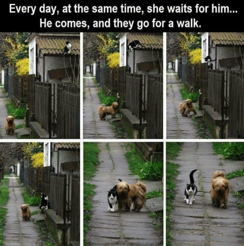 Memes, Time, and 🤖: Every day, at the same time, she waits for him...  He comes, and they go for a walk.