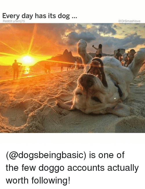 Memes, Reddit, and 🤖: Every day has its dog..  Reddit u/tkmj75  @DrSmashlove (@dogsbeingbasic) is one of the few doggo accounts actually worth following!