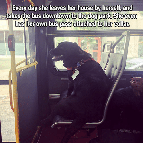 House, Her, and Dog: Every day she leaves her house by herself, and  asthe bus downtown to th  xrtak  e dog park, She even  attached toher clara  as her own bus pass attached to her Collar