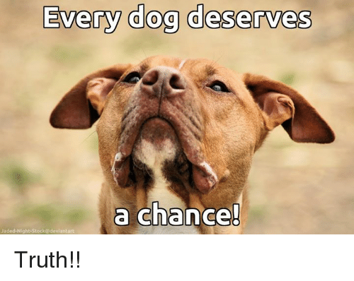 Memes, Deviantart, and Truth: Every dog deserves  a chance  Jaded-Night-Stock@deviantart Truth!!