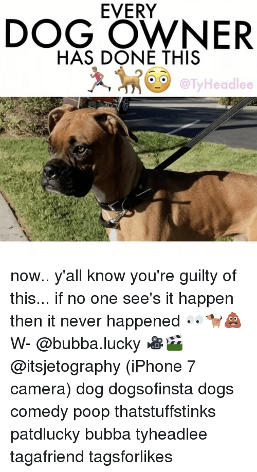 Bubba: EVERY  DOG OWNER  HAS DONE THIS  Headlee now.. y'all know you're guilty of this... if no one see's it happen then it never happened 👀🐕💩 W- @bubba.lucky 🎥🎬 @itsjetography (iPhone 7 camera) dog dogsofinsta dogs comedy poop thatstuffstinks patdlucky bubba tyheadlee tagafriend tagsforlikes