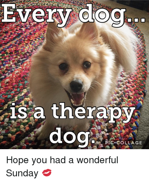 Every Dog Sa Therapy Dog Pic Collage Hope You Had A