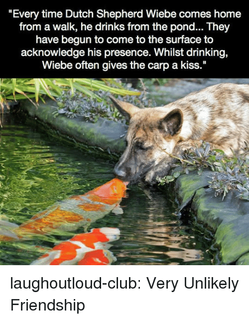 """Club, Drinking, and Tumblr: """"Every time Dutch Shepherd Wiebe comes home  from a walk, he drinks from the pond... They  have begun to come to the surface to  acknowledge his presence. Whilst drinking,  Wiebe often gives the carp a kiss."""" laughoutloud-club:  Very Unlikely Friendship"""