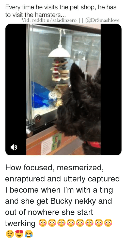 Memes, Reddit, and Time: Every time he visits the pet shop, he has  to visit the hamsters...  Vid: reddit u/saladinzero | | aDrSmashlove How focused, mesmerized, enraptured and utterly captured I become when I'm with a ting and she get Bucky nekky and out of nowhere she start twerking 😳😳😳😳😳😳😳😳🤤😍😂