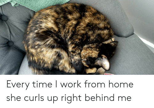 Work, Home, and Time: Every time I work from home she curls up right behind me
