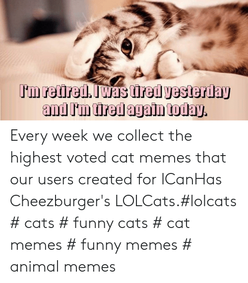 LOLcats: Every week we collect the highest voted cat memes that our users created for ICanHas Cheezburger's LOLCats.#lolcats # cats # funny cats # cat memes # funny memes # animal memes