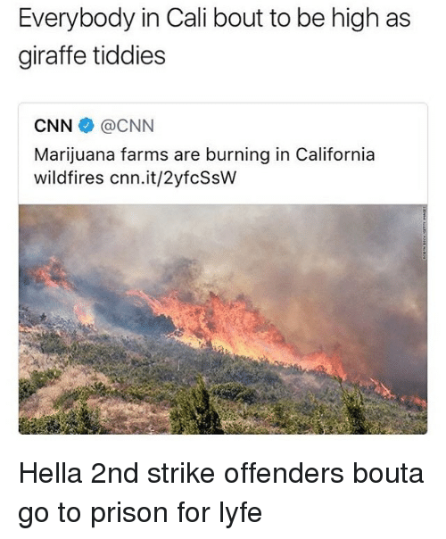 cnn.com, Prison, and California: Everybody in Cali bout to be high as  giraffe tiddies  CNN @CNN  Marijuana farms are burning in California  wildfires cnn.it/2yfcSsVw Hella 2nd strike offenders bouta go to prison for lyfe