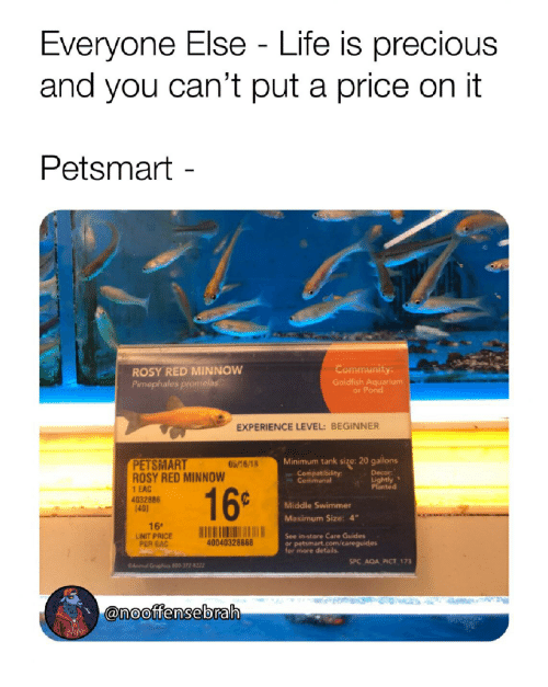"""Goldfish, Life, and Precious: Everyone Else - Life is precious  and you can't put a price on it  Petsmart -  ROSY RED MINNOW  Pimephales promelas  Communit  Goldfish Aquarium  y:  or Pond  EXPERIENCE LEVEL: BEGINNER  Minimum tank size: 20 gallons  PETSMART  ROSY RED MINNOW  1 EAC  4032886  40]  05/16/18  Compatibility  Communal  Decor  Lightly  Pianted  16-  Middle Swimmer  Maximum Size: 4""""  See in-store Care Guides  16e  UNITPRİCE  PER EAC  40040328868  or petsmart.com/careguides  for more details.  SPC AQA PICT 173  Anirnall Graphics 800-372-8222  ˋ-@n oottensebral"""