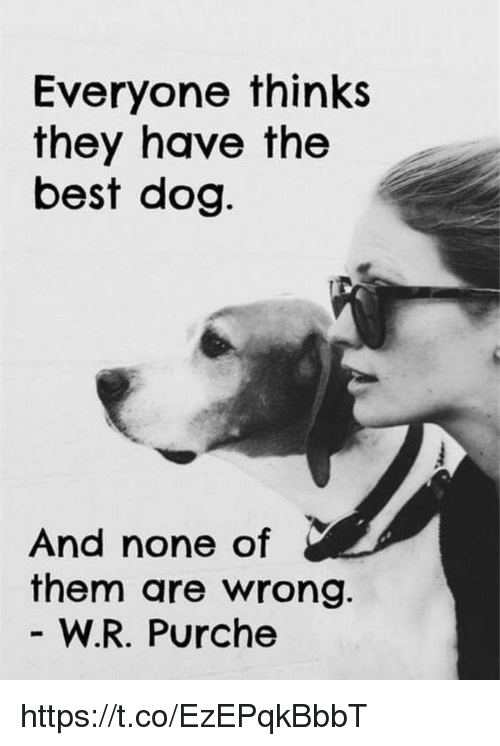 Memes, Best, and 🤖: Everyone thinks  they have the  best dog  And none of  them are wrong  W.R. Purche https://t.co/EzEPqkBbbT