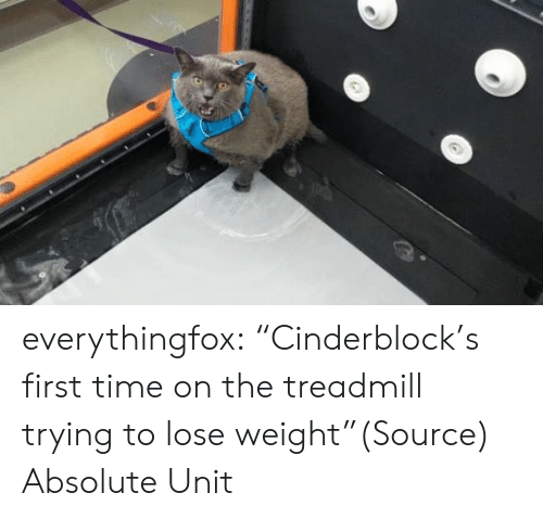 """Www Reddit: everythingfox:  """"Cinderblock's first time on the treadmill trying to lose weight""""(Source)  Absolute Unit"""