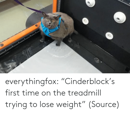 """Weight: everythingfox: """"Cinderblock's first time on the treadmill trying to lose weight"""" (Source)"""