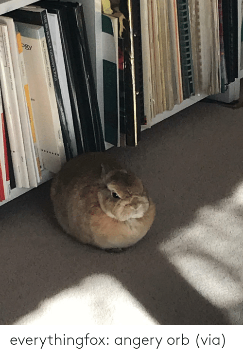 Imgur: everythingfox: angery orb (via)