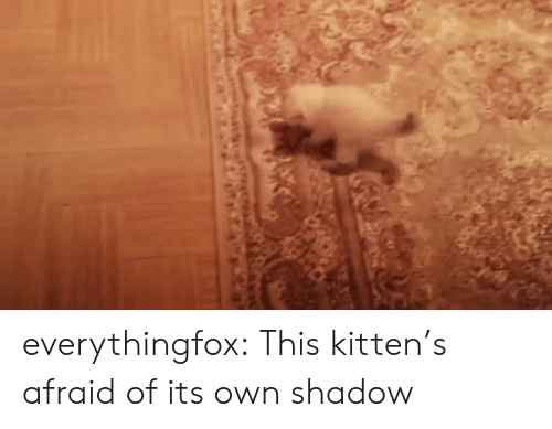 Aww, Reddit, and Target: everythingfox:   This kitten's afraid of its own shadow