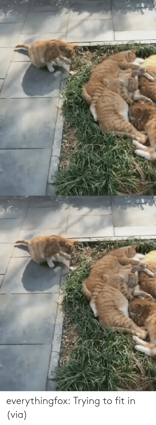 Imgur: everythingfox:  Trying to fit in (via)