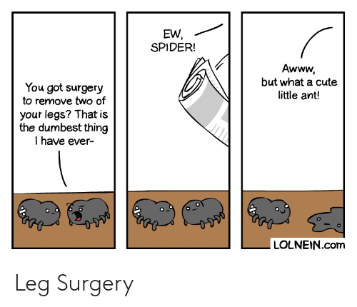 dumbest: EW,  SPIDER!  Awww,  but what a cute  little ant!  You got surgery  to remove two of  your legs? That is  the dumbest thing  Ihave ever-  LOLNEIN.com Leg Surgery