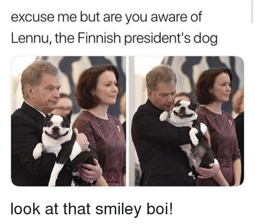Presidents, Boi, and Dog: excuse me but are you aware of  Lennu, the Finnish president's dog look at that smiley boi!