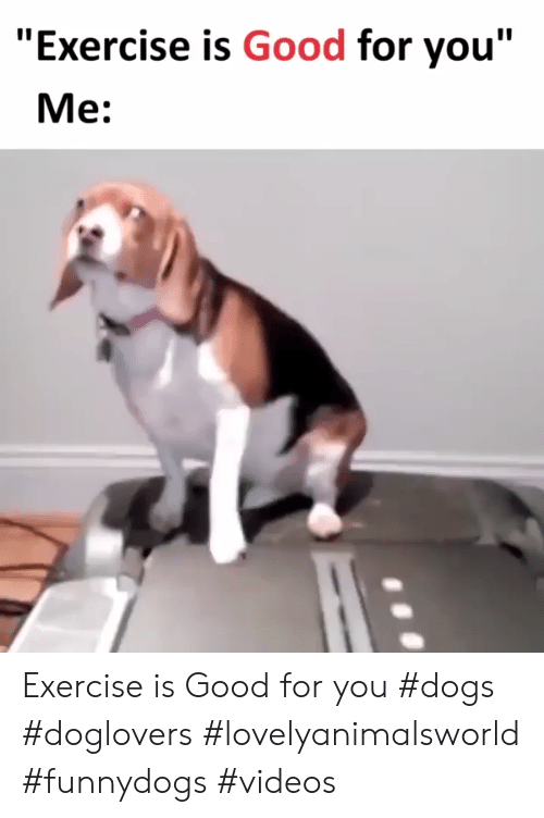 """Dogs, Good for You, and Videos: """"Exercise is Good for you""""  Me: Exercise is Good for you #dogs #doglovers #lovelyanimalsworld #funnydogs #videos"""