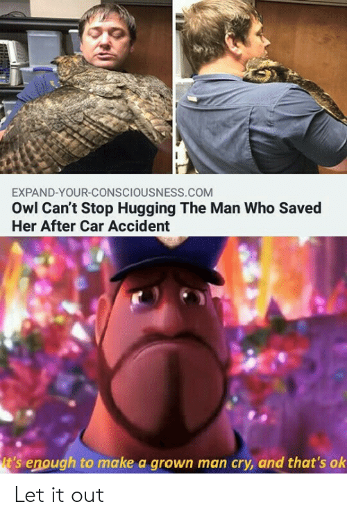 owl: EXPAND-YOUR-CONSCIOUSNESS.COM  Owl Can't Stop Hugging The Man Who Saved  Her After Car Accident  t's enough to make a grown man cry, and that's ok Let it out