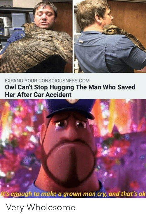 owl: EXPAND-YOUR-CONSCIOUSNESS.COM  Owl Can't Stop Hugging The Man Who Saved  Her After Car Accident  t's enough to make a grown man cry, and that's ok Very Wholesome