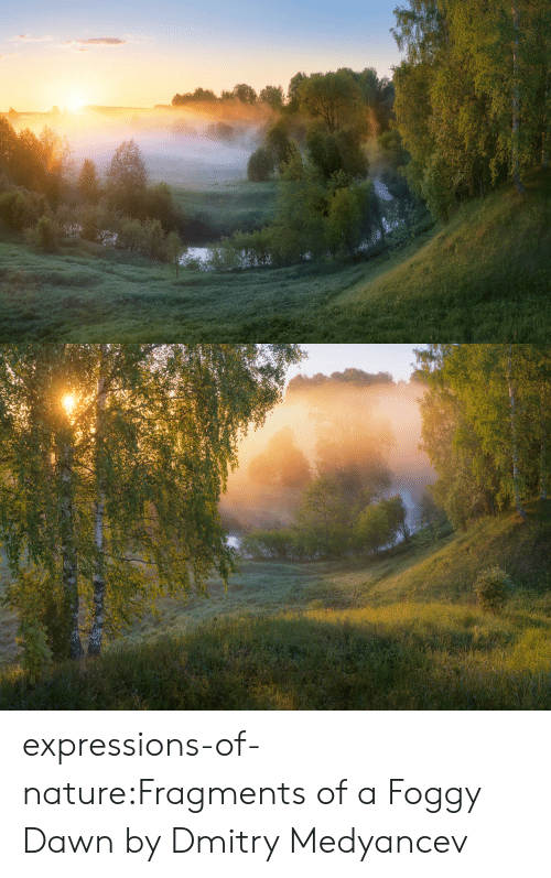 Target, Tumblr, and Blog: expressions-of-nature:Fragments of a Foggy Dawn by Dmitry Medyancev