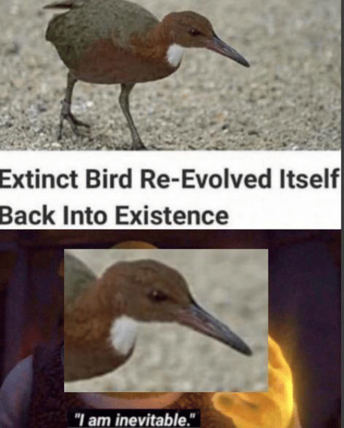 """Memes, Back, and 🤖: Extinct Bird Re-Evolved Itself  Back Into Existence  """"I am inevitable."""""""