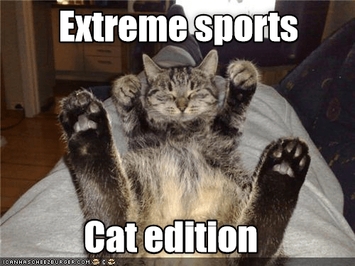 Sports, Cat, and Com: Extreme sports  Cat edition  ICANHASCHEE2BURGER cOM