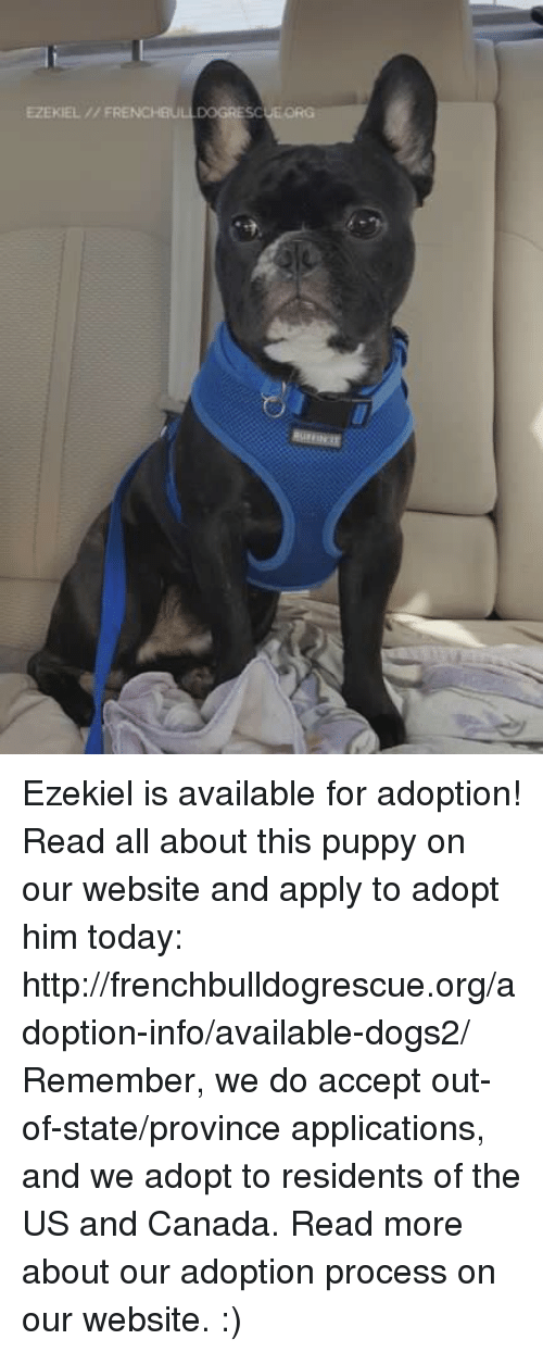 Memes, 🤖, and Ezekiel: EZEKIEL FRENCHBU Ezekiel is available for adoption! Read all about this puppy on our website <location, likes, dislikes> and apply to adopt him today: http://frenchbulldogrescue.org/adoption-info/available-dogs2/  Remember, we do accept out-of-state/province applications, and we adopt to residents of the US and Canada. Read more about our adoption process on our website. :)