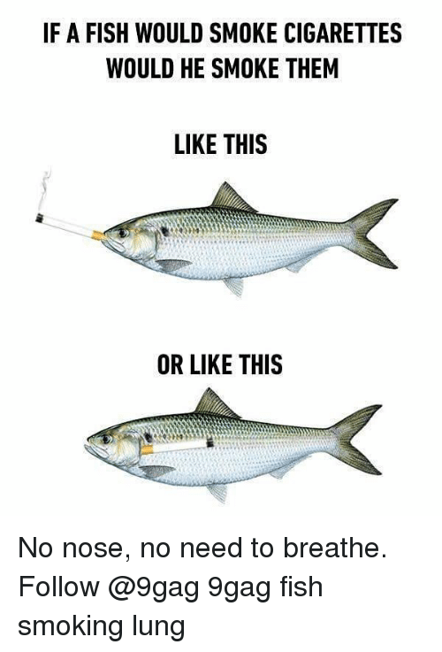 9gag, Memes, and Smoking: F A FISH WOULD SMOKE CIGARETTES  WOULD HE SMOKE THEM  LIKE THIS  OR LIKE THIS No nose, no need to breathe. Follow @9gag 9gag fish smoking lung