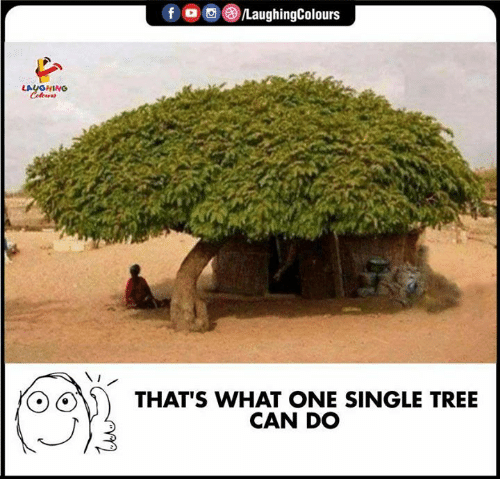 Tree, Indianpeoplefacebook, and Single: f /LaughingColours  LAYGHING  Celeurs  THAT'S WHAT ONE SINGLE TREE  CAN DO