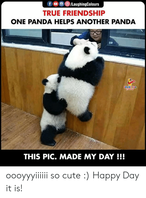 Cute, True, and Panda: f /LaughingColours  TRUE FRIENDSHIP  ONE PANDA HELPS ANOTHER PANDA  LAUGHING  Clers  THIS PIC. MADE MY DAY !!! oooyyyiiiiii so cute :) Happy Day it is!
