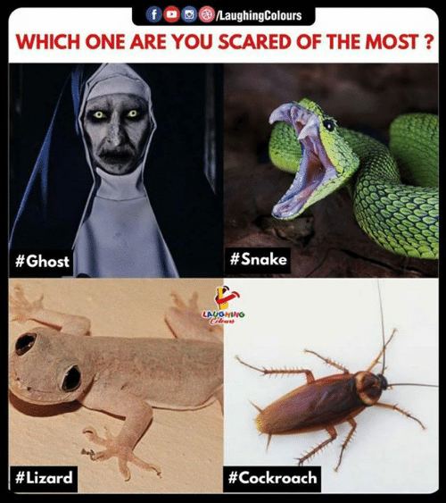 Ghost, Snake, and Indianpeoplefacebook: f /LaughingColours  WHICH ONE ARE YOU SCARED OF THE MOST?  0  # Ghost  # Snake  LAUGHING  # Lizard  # Cockroach