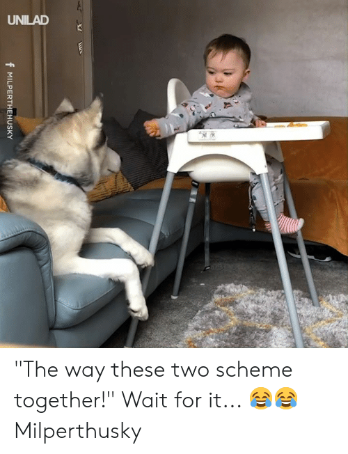 """Dank, 🤖, and Scheme: f MILPERTHEHUSKY """"The way these two scheme together!"""" Wait for it... 😂😂  Milperthusky"""