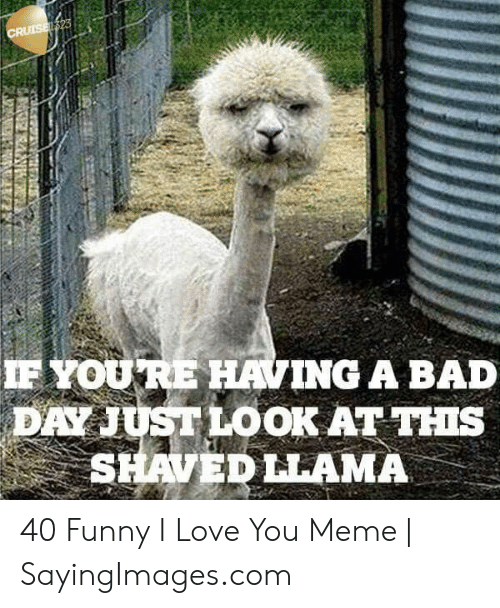 Bad, Bad Day, and Funny: F YOURE HAVING A BAD  DAY JUST LOOK AT THIs  SHAVEDLLAMA 40 Funny I Love You Meme | SayingImages.com