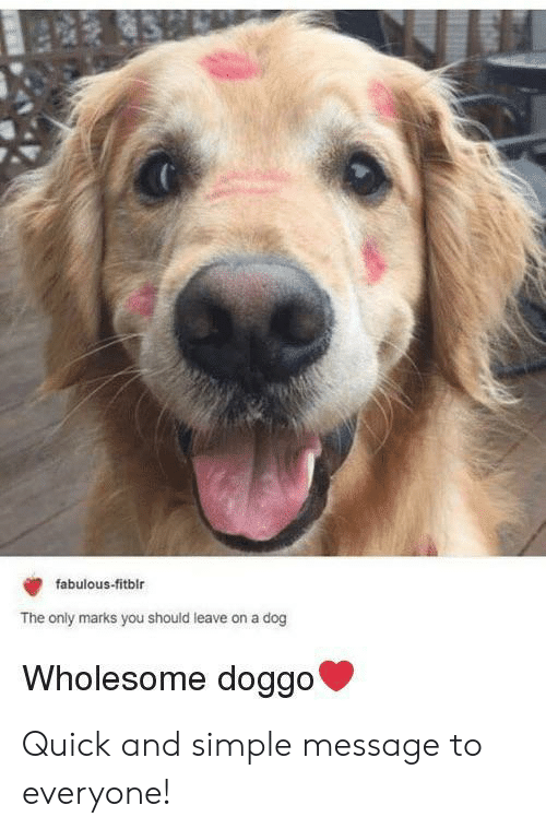 Wholesome, Doggo, and Simple: fabulous-fitblr  The only marks you should leave on a dog  Wholesome doggo' Quick and simple message to everyone!