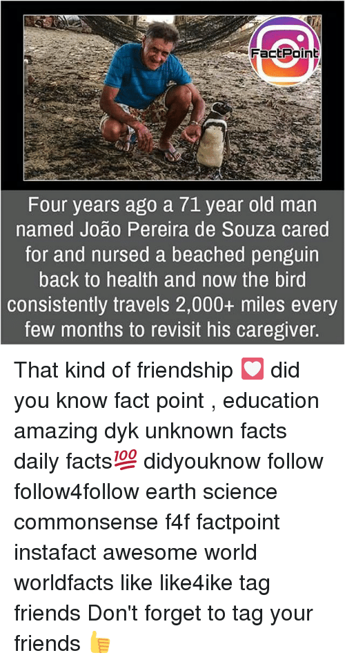 Facts, Friends, and Memes: FactPoin  Four years ago a 71 year old man  named João Pereira de Souza cared  for and nursed a beached penguin  back to health and now the bird  consistently travels 2,000+ miles every  few months to revisit his caregiver That kind of friendship 💟 did you know fact point , education amazing dyk unknown facts daily facts💯 didyouknow follow follow4follow earth science commonsense f4f factpoint instafact awesome world worldfacts like like4ike tag friends Don't forget to tag your friends 👍
