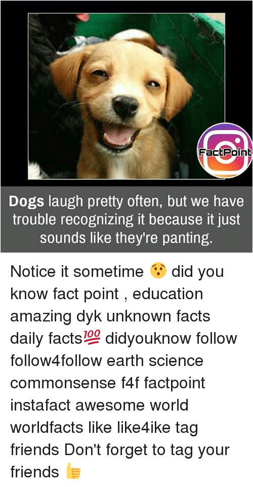 panting: FactPoint  Dogs laugh pretty often, but we have  trouble recognizing it because it just  sounds like they re panting Notice it sometime 😯 did you know fact point , education amazing dyk unknown facts daily facts💯 didyouknow follow follow4follow earth science commonsense f4f factpoint instafact awesome world worldfacts like like4ike tag friends Don't forget to tag your friends 👍
