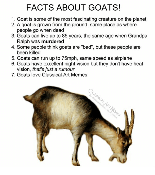 "Bad, Facts, and Love: FACTS ABOUT GOATS!  1. Goat is some of the most fascinating creature on the planet  2. A goat is grown from the ground, same place as where  people go when dead  3. Goats can live up to 85 years, the same age when Grandpa  Ralph was murdered  4. Some people think goats are ""bad"", but these people are  been killed  5. Goats can run up to 75mph, same speed as airplane  6. Goats have excellent night vision but they don't have heat  vision, that's just a rumour  7. Goats love Classical Art Memes"