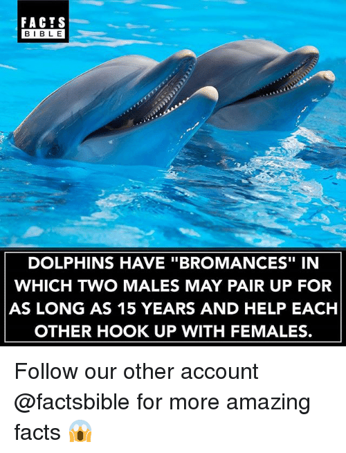 "Facts, Memes, and Bible: FACTS  BIBLE  BIBL E  DOLPHINS HAVE ""BROMANCES"" IN  WHICH TWO MALES MAY PAIR UP FOR  AS LONG AS 15 YEARS AND HELP EACH  OTHER HOOK UP WITH FEMALES. Follow our other account @factsbible for more amazing facts 😱"