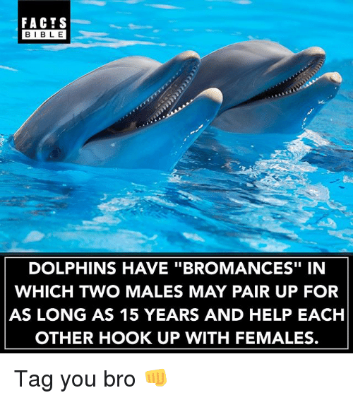 "Facts, Memes, and Bible: FACTS  BIBLE  BIBL E  DOLPHINS HAVE ""BROMANCES"" IN  WHICH TWO MALES MAY PAIR UP FOR  AS LONG AS 15 YEARS AND HELP EACH  OTHER HOOK UP WITH FEMALES. Tag you bro 👊"