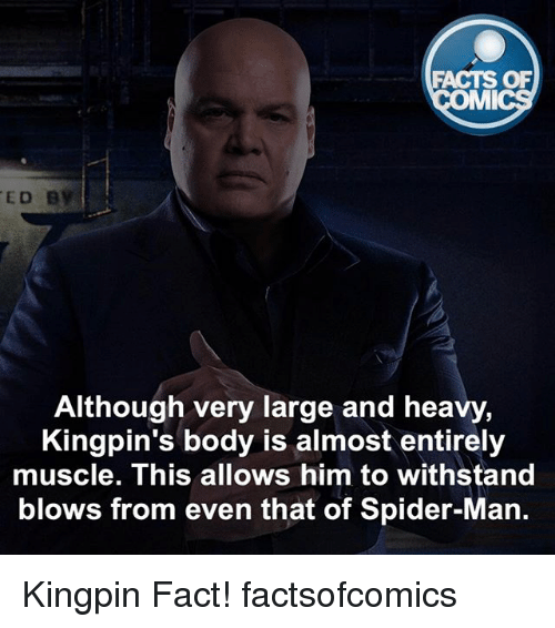 mmy: FACTS OF  MMI  ED B  Although very large and heavy,  Kingpin's body is almost entirely  muscle. This allows him to withstand  blows from even that of Spider-Man. Kingpin Fact! factsofcomics
