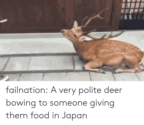 Deer, Food, and Tumblr: failnation:  A very polite deer bowing to someone giving them food in Japan
