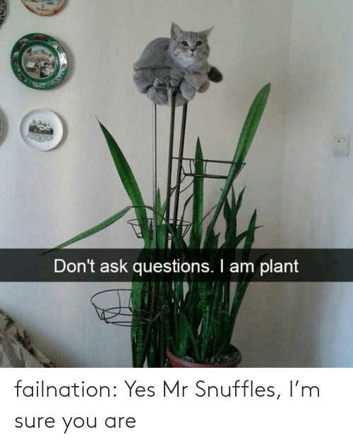 You Are: failnation:  Yes Mr Snuffles, I'm sure you are