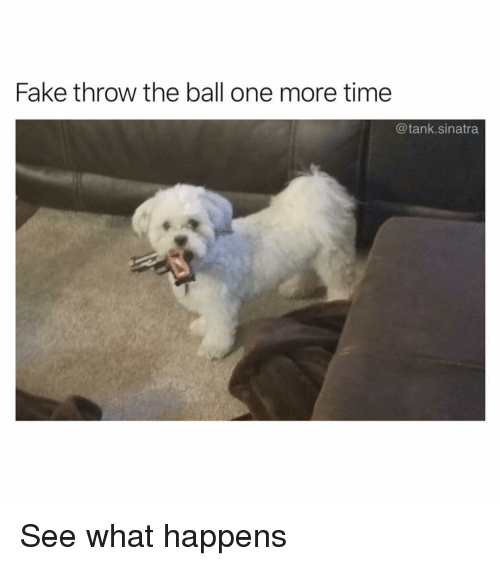 Fake, Funny, and Time: Fake throw the ball one more time  @tank.sinatra See what happens