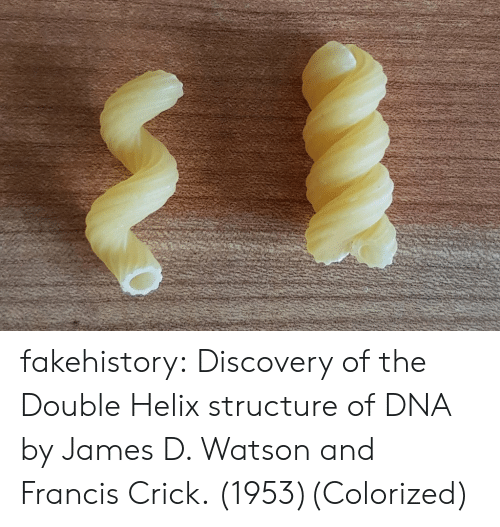 Tumblr, Blog, and Helix: fakehistory:  Discovery of the Double Helix structure of DNA by James D. Watson and Francis Crick. (1953)(Colorized)