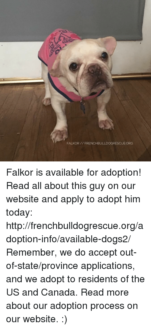 Memes, 🤖, and Application: FALKOR FRENCHBULLDOGRESCUE ORG Falkor is available for adoption! Read all about this guy on our website <location, likes, dislikes> and apply to adopt him today: http://frenchbulldogrescue.org/adoption-info/available-dogs2/  Remember, we do accept out-of-state/province applications, and we adopt to residents of the US and Canada. Read more about our adoption process on our website. :)
