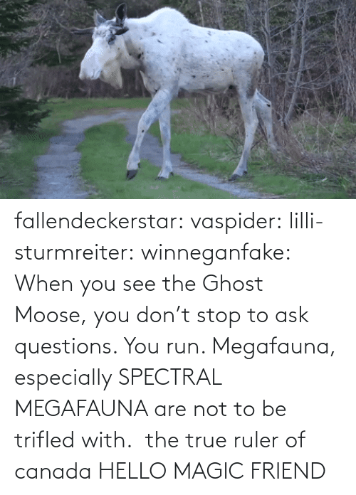 Canada: fallendeckerstar: vaspider:  lilli-sturmreiter:  winneganfake: When you see the Ghost Moose, you don't stop to ask questions. You run. Megafauna, especially SPECTRAL MEGAFAUNA are not to be trifled with.  the true ruler of canada  HELLO MAGIC FRIEND