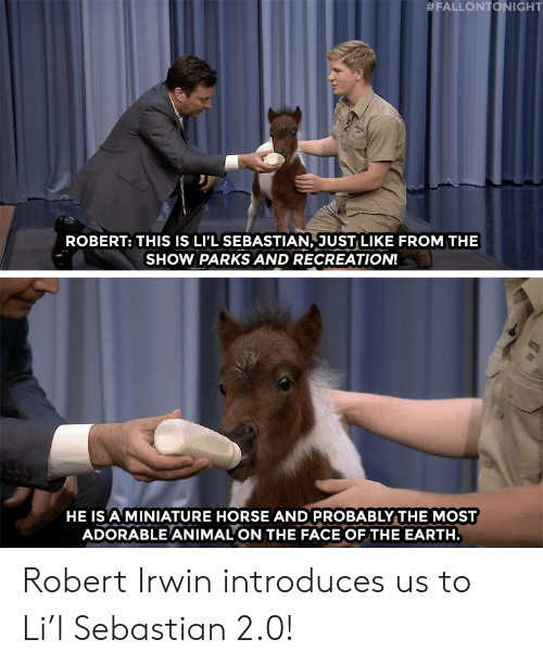 Parks and Recreation, Target, and youtube.com:  #FALLONTONIGHT  ROBERT: THIS IS LI'L SEBASTIAN, JUST LIKE FROM THE  SHOW PARKS AND RECREATION!  HE IS A MINIATURE HORSE AND PROBABLY THE MOST  ADORABLE ANIMAL ON THE FACE OFTHE EARTH Robert Irwin introduces us to Li'l Sebastian 2.0!