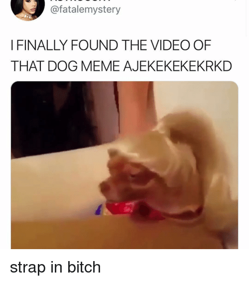 Dog Meme: @fatalemystery  I FINALLY FOUND THE VIDEO OF  THAT DOG MEME AJEKEKEKEKRKD strap in bitch
