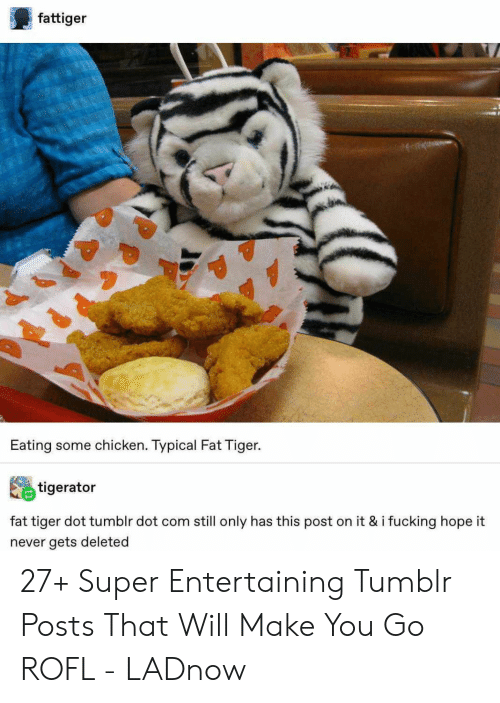 Fucking, Tumblr, and Chicken: fattiger  Eating some chicken. Typical Fat Tiger.  tigerator  fat tiger dot tumblr dot com still only has this post on it & i fucking hope it  never gets deleted 27+ Super Entertaining Tumblr Posts That Will Make You Go ROFL - LADnow